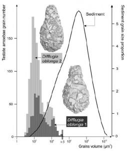 Difflugia grain sizes