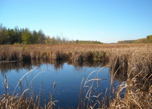 A marsh in the Mer Bleue Conservation Area