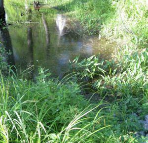 Turtle Pond2